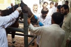 During physical examination- Batkhela