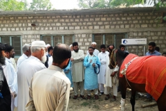 Dr. Zakir Hussain briefing the participants on Physical examination of Animal in Practical- Batkhela