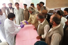 12.Swab collection in poultry-Chaman